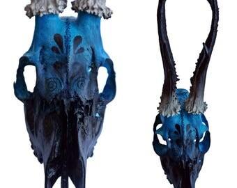 Skull - Turquoise/black