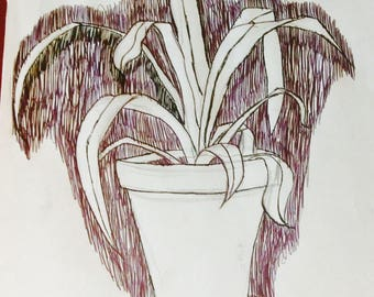 Potted Plant Pen Drawing