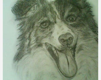 Graphite dog drawing
