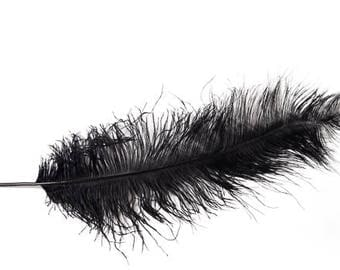 "Black Ostrich Feathers Prime, 12 Pack 20""+"