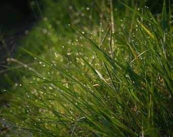 spring morning dew photography prints grass