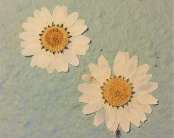 White Daisy Pressed Flower Card on Plantable Paper