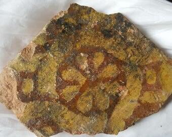 English medieval decorative glazed terracotta floor tile