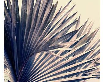 Nature Photograph - Palm Tree Art - Tropical Print - Botanical Art Print - Gray Bismarck #1 - Fine Art Photo - California Art - Florida Art