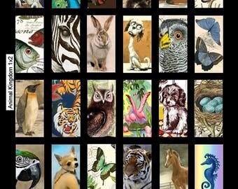 Animal Kingdom - 1x2 - Digital Collage Sheet - Instant Download
