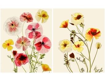 Two Botanical Art Prints Set, California Poppy Art,  Scanner Art, Floral Art, Cottage Chic Decor, Rustic Home Decor, 8 x 10, 11 x 14