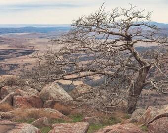 Leaning Tree Photography, Oklahoma Fine Art Print, Wichita Mountains, Mount Scott Oklahoma, Weather Worn, Desert Landscape