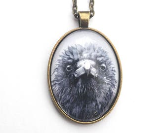 Frazzled Crow in a Vintage Style Brass Oval Pendant with Fine Art Print by June Hunter and Glass Dome, Crow Lover Gift, Miniature Art