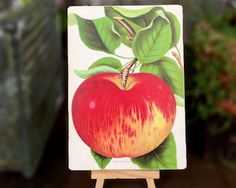 Antique Print of an Apple on Panel - Rare 1890 Fruit Chromolithographo - Ready to Display