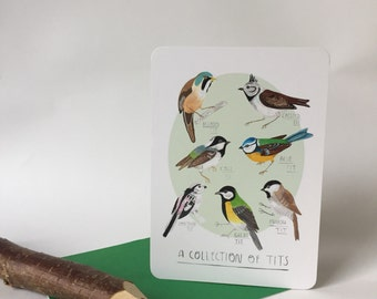 A collection of tits - Postcard A6
