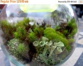 20% off Terrarium kit-DIY Large Moss & lichen kit-FEATURED in 2015 Blog cabin in the 50 states of Etsy-Build your own-FREE Moss Care Book