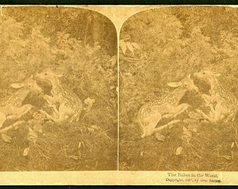 Taxidermy Deer/Fawns - Babes in the Woods - George Barker - 1890s Stereoview