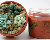 Faux Succulents Stash Jar #17B - ready to ship  - air tight, water proof - 4 oz.