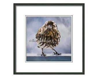 House Finch PRINT bird art wildlife nature