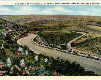 Vintage New Mexico Postcard - The Scenic Drive through Carlsbad Caverns National Park (Unused)