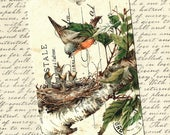 Bird Gift Tags, Baby Birds, Nature Tags, Nest, Bird Tags, Party Favors, Gift Tags