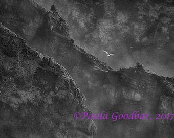 Seagull Flying Over Oregon Coast - Black and White Archival Photographic Print