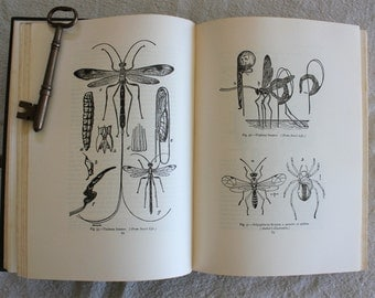 The Insect Book by Leland O Howard Ph. D. 1923  Illustrated Entemology