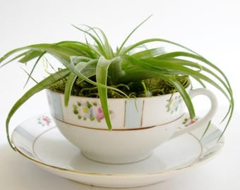 Tea Cup Planter, Air Planter, Mother's Day gift, House Warming Gift, Tea Cup Decor