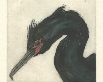 Pelagic Cormorant, fine art etching