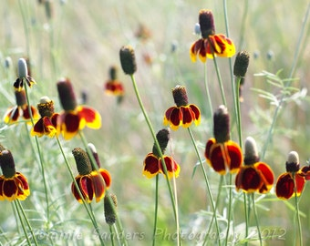Dark Red Summer Flowers Photograph Digital Download Floral Nature Photography Nursery Decor