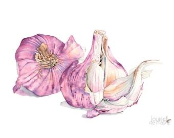 Garlic Print, Garlic watercolour painting, food illustration, kitchen wall art print, 5 by 7 size, G16216, Botanical wall art print