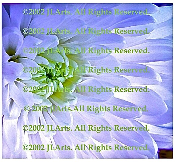 DIGITAL DOWNLOAD 3 jpeg images White Flower Photography Mum pastel lime green lilac ethereal dreamy Janet Long Arts