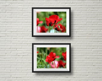 Red poppies wall art, flower photography, nature photography, photography set, botanical prints,floral horizontal prints, discount set