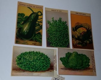 D 5 1920's vegetable seed packet labels French lithograph ephemera art scrapbook supplies Vintage advertising label scrap lot