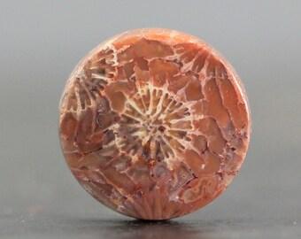 Fossilized Coral Cabochon, Fossil Gemstone Petoskey Stone (CA6893)