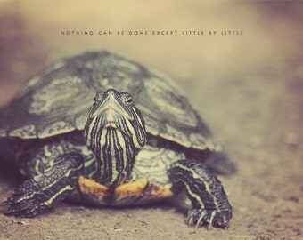 Turtle Shell, Turtle Photo, Typography Photo, Turtle GIft, Turtle Print, Turtle Art, Turtle Photography, Turtle Decor, Turtle Lover
