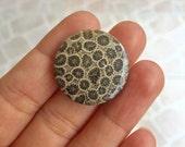 Beautiful Fossil Cabochon Stone