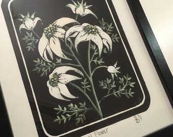 Lino Print - Australian Flannel Flower - Hand Pulled and Coloured