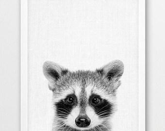 Raccoon Print, Cute Baby Raccoon, Black White Photo, Woodlands Animal Print, Nursery Wall Art, Animals Photo, Home Kids Room Printable Decor