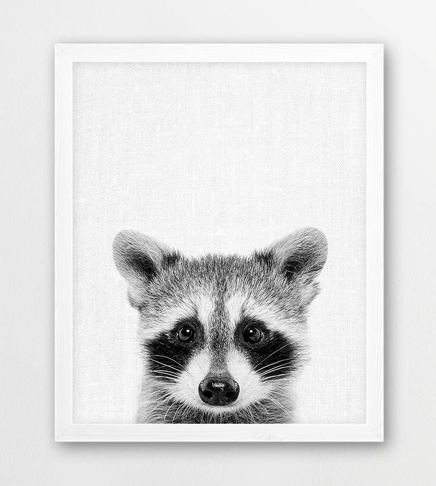 raccoon print cute baby raccoon black white photo woodlands
