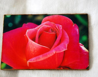 wood photo magnet, red rose photograph