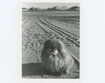 Vintage Snapshot Photo: Koko in San Felipe, March 1978 (610512)