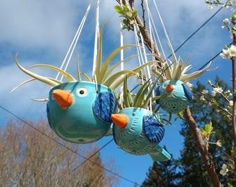 Mini, Baby Bluebirds of Happiness, Hanging Planters, Air Plants, Succulents, Birders