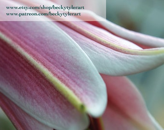 Oriental Lily Fine Art Photo Print