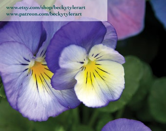 Viola Photography Fine Art Photo Print