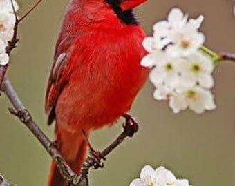 Custom Song Bird Painting on professional canvas, Fine Art,  Original Oil Paintigng Bird Art on Etsy