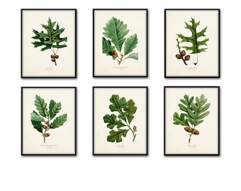 Oak Leaf Botanical Print Set No. 3, Botanical Prints, Antique Botanical, Vintage Botanical, Giclee, Illustration, Collage, Oak Leaf Prints
