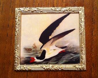 Miniature Audubon Black Skimmer print for dollhouse