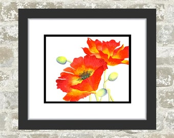 GICLEE PRINT, Red Poppy Print - Poppy Painting - Red Poppies - Water Color Flowers - Red Flowers, Orange Poppies, Fine Art Print, Flower Art