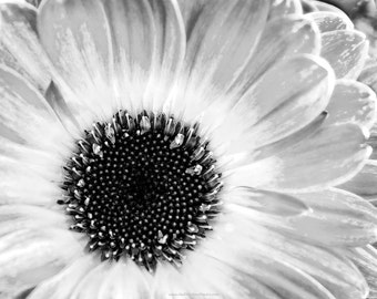 Daisy Fine Art  in Black and White or Color, Photographic Fine Art Print or Canvas Wrap, Macro Floral Fine Art Photography