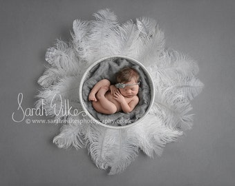 Newborn Dital Backdrop - White Feathers