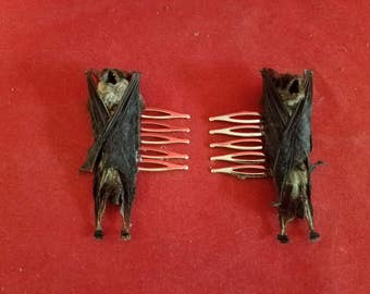 Taxidermy Bat Hair Barrett-Gothic-goth-fantasy--pagan-voodoo-witch-comb