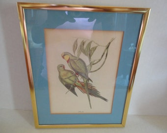 Gould Bird Print - Framed