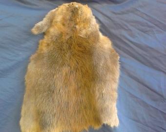 1 real animal tanned beaver skin pelt hide fur rug taxidermy leather