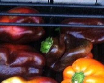 Midnight Dreams Black Bell Pepper,  10+ seeds  OP/Heirloom